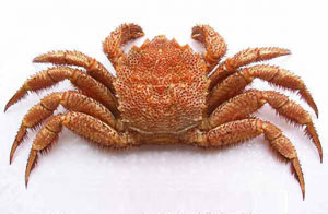 Crab hairy