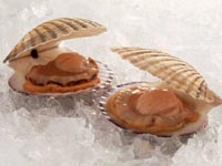 Купить морской гребешок