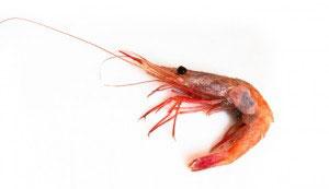 Shrimp humpy