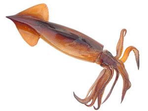 Squid Commander