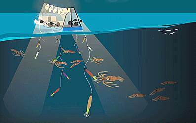 Добыча кальмаров