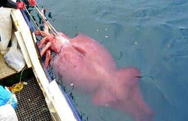 Добыча кальмаров днем