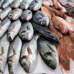 Рыба оптом в СПБ