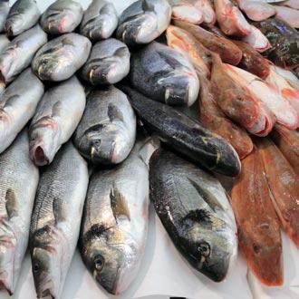 Св/м рыба оптом в СПБ