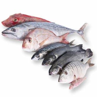 Продать рыбу используя советы маркетологов