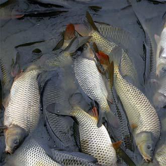Прием заявок на добычу речной  рыбы
