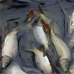 Заявки на речную рыбу
