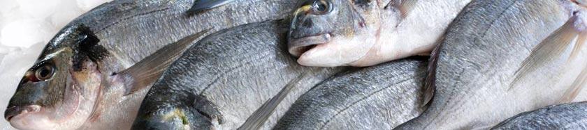 Оптовые цены на рыбу