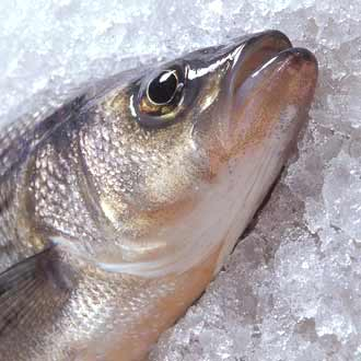 Заморозка рыбы и морепродуктов | Виды и способы